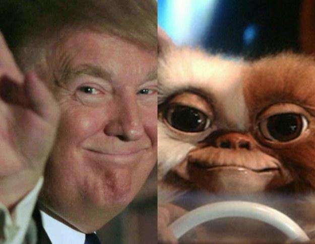 Gizmo y Donald Trump