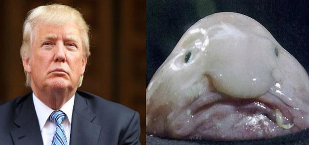 Pez Blob y Donald Trump