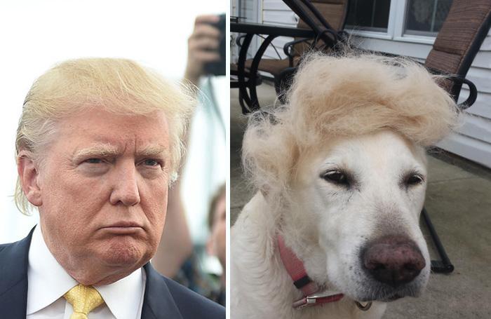 Precandidato Donald Trump junto a la foto de un perro con una pequeña peluca encima de su cabeza