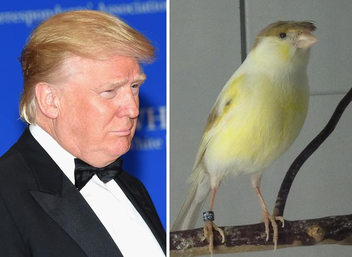 donal Trump igual a un pájaro