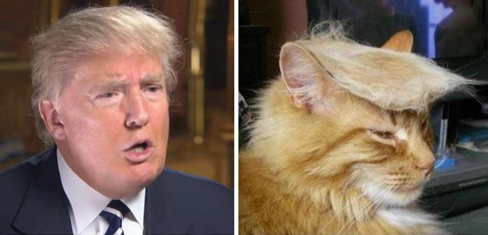 foto de un gato a un costado de la imagen de Donald Trump