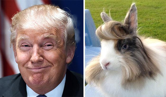 Fotografías divididas en dos de un conejo y Donald Trump