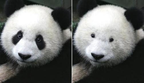Imagem de um panda dividido em duas partes