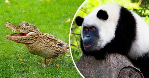 Un muy buen experimento visual al hacer animales híbridos en photoshop