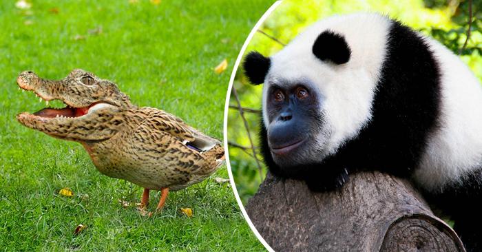 Fotos de animales mas raros 9