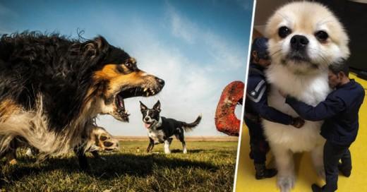 Imágenes captadas en el preciso momento que parecen que tu perro es un gigante