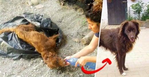 La maravillosa transformacion de este perrito demuestra que cuando uno quiere... quiere!