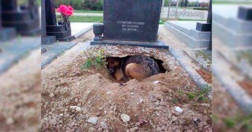 En el pasado mes de abril se hizo viral la imagen de una perrita pastor alemán que supuestamente vivía en el hoyo de la tumba de su fallecido dueño.