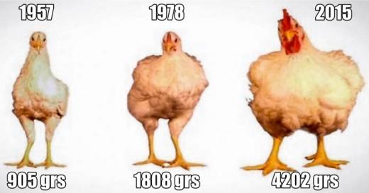 Una gran variedad de alimentos que consumimos frecuentemente han sido alterados genéticamente por la ciencia, tanto para darles un mejor aspecto como para buscar un mayor número de nutrientes.