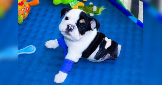 Pup es un perrito que tiene solo la mitad de su cuerpo conoce esta gran historia