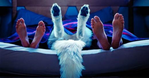 Dormir o permitir que tu perro duerma contigo es recomendable en muchos aspectos