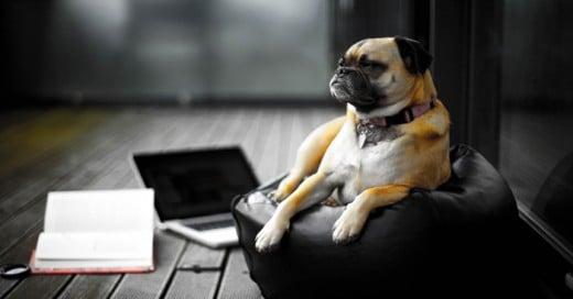 Procura hacer una prueba por día, esto para evitar que tu mascota se agobie y te dé un resultado poco certero.