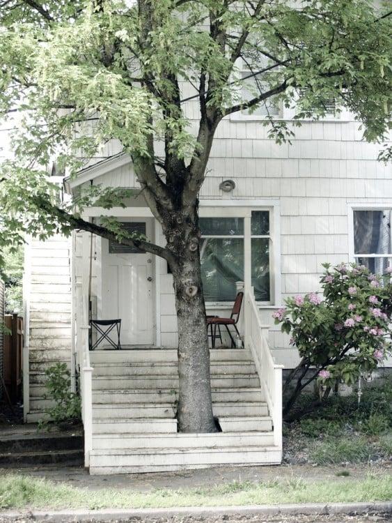 árbol en la entrada de una casa