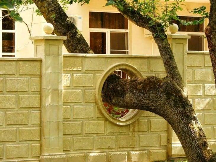 Árbol con ramas entrando a una casa