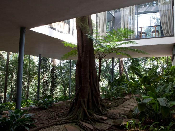 un gran árbol en el exterior de una casa