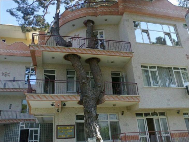 edificio que tiene un árbol en su diseño