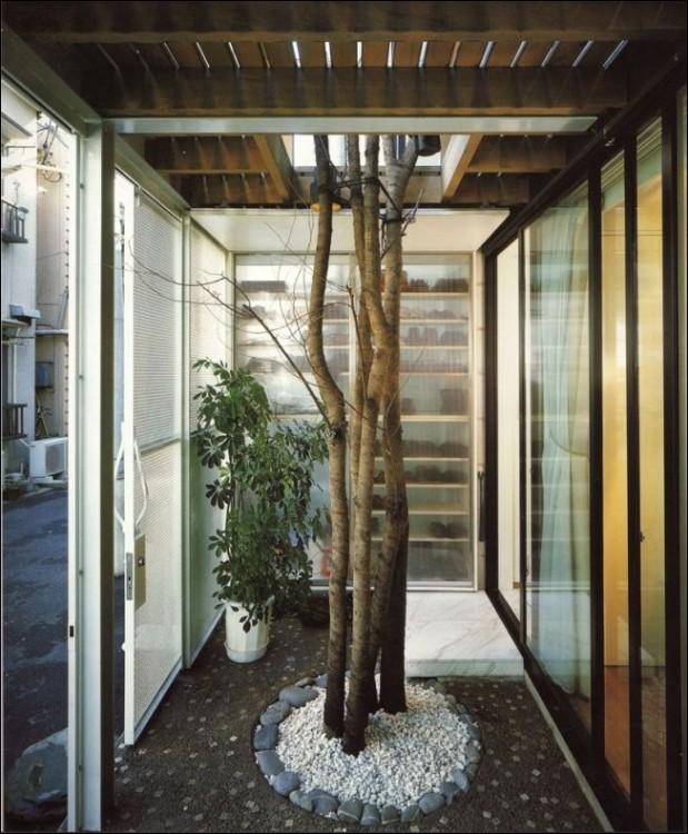 árbol en medio de una habitación de una casa