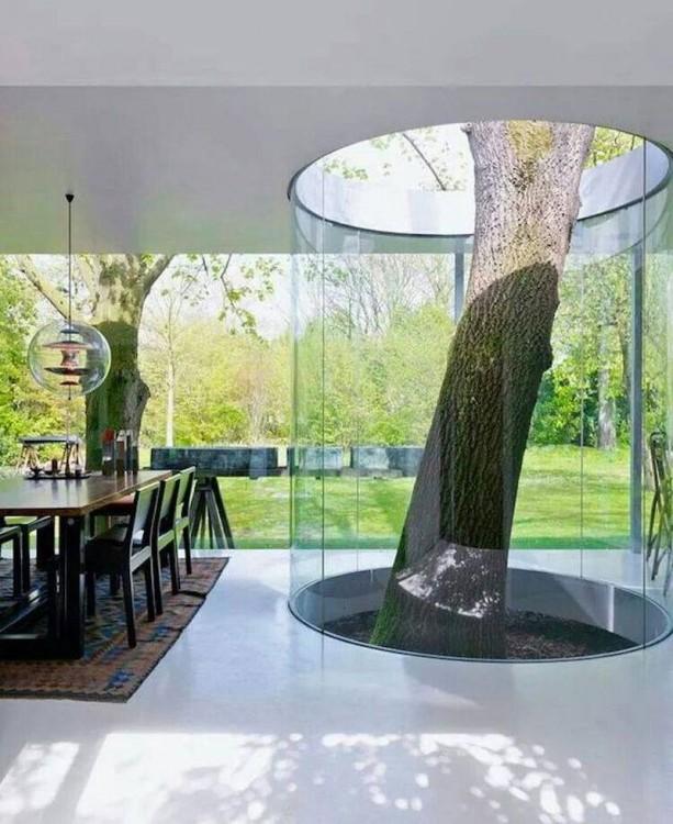 casa con un árbol en su interior