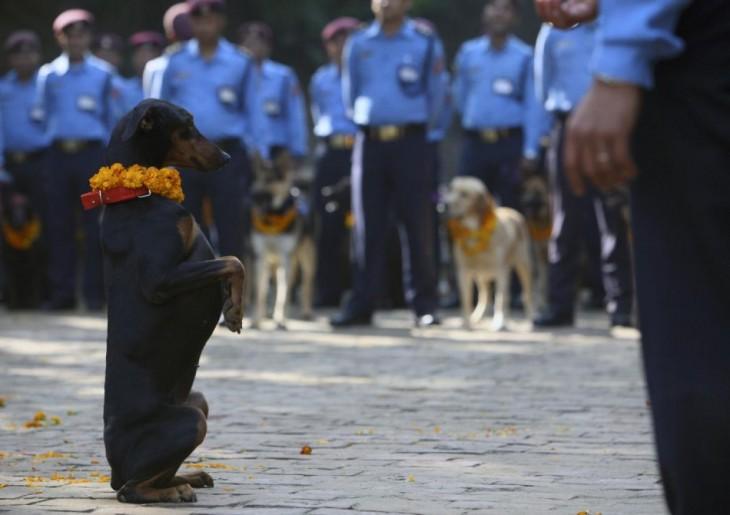 perro salchicha parado sobre sus dos patas en medio de muchos policías en un festival
