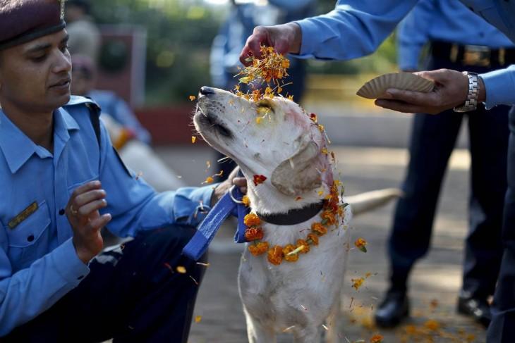 Policías echando flores en la cabeza de un perro