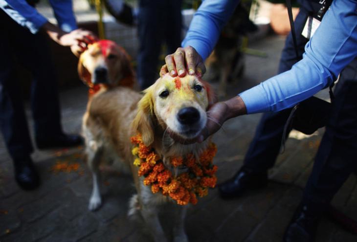personas acariciando a un perro en medio del festival de Nepal