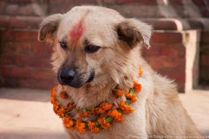 Perro con dos coronas de flores en el cuello