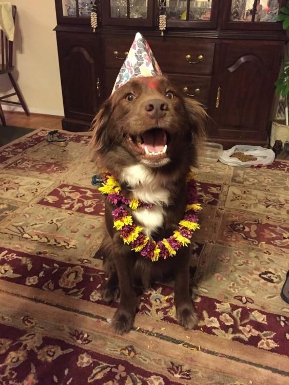 un perro sobre una alfombra con un gorro de fiestas en la cabeza y una corona de flores de cuello