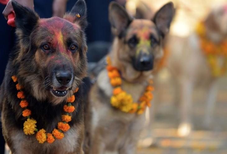 Festival en Nepal dedicado a agradecer la lealtad de los perros