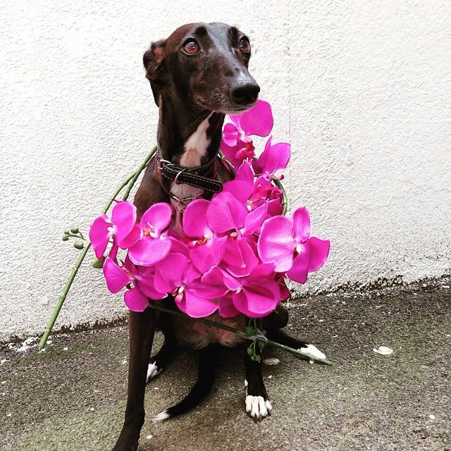 un perro de color negro con una corona de flores sobre su cuello