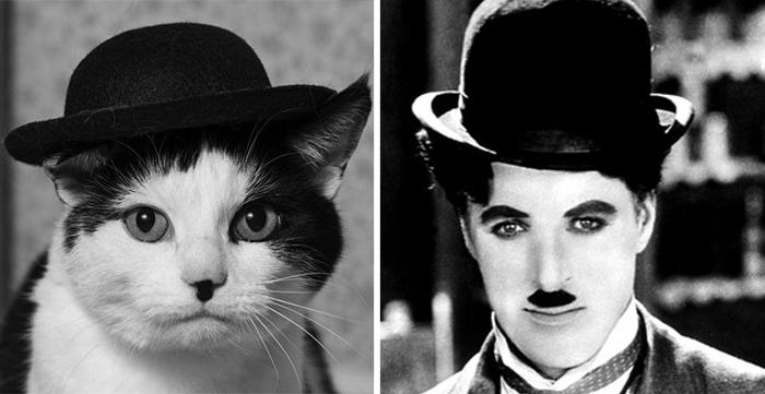 Gato que se parece a Charles Chaplin