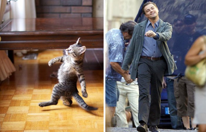 Un gato que simula caminar como Leonardo Dicaprio