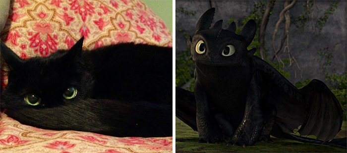 gato de como entrenar a tu Dragón