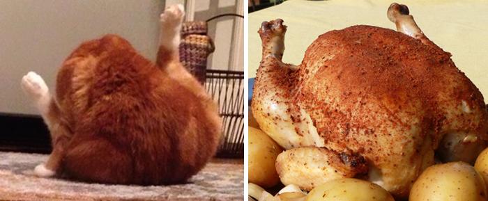 Gato que esta en la pose de un pollo asado