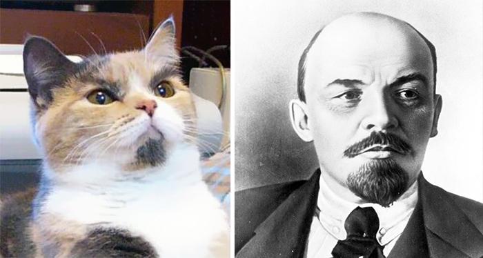 Fotografías de gatos junto a sus dobles (¡Leningato!)