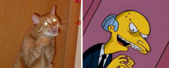 Gato con la misma pose del Sr. Burns de Los Simpson