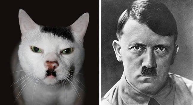Gato igual a Hitler