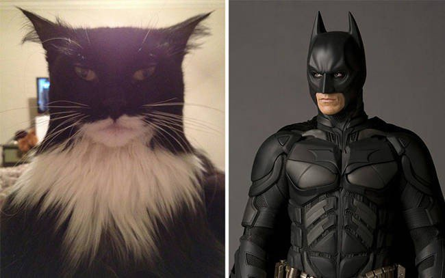 Batman junto a su batcat