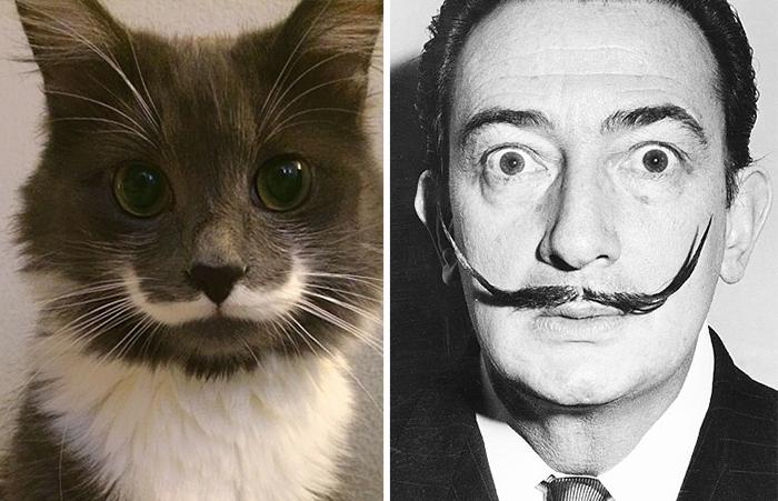 Gato que se parece a Salvador Dalí