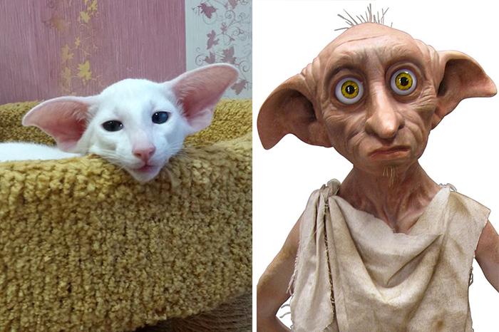 El gato que se parece a Dobbie