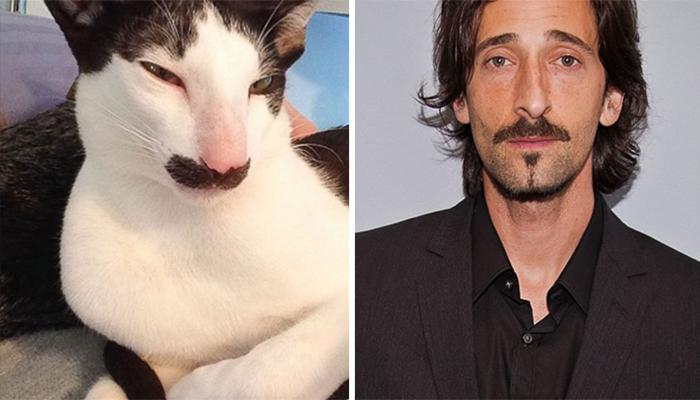 El gato que es el doble del actor Adrien Brody)