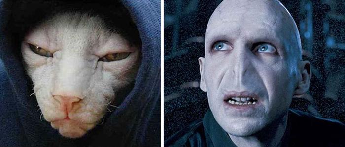 Gato que se parece a Voldemort de Harry Potter