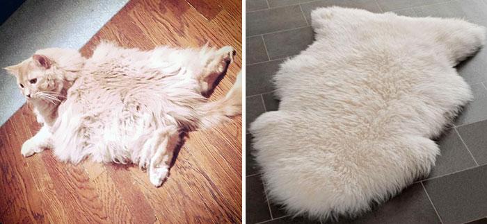 Gato que se parece a una alfombra en el suelo