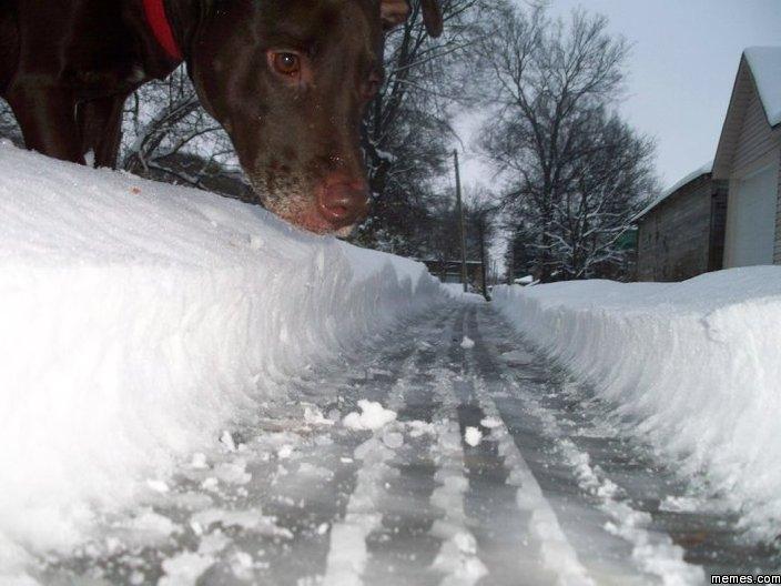 Cara de un perro en medio de la nieve