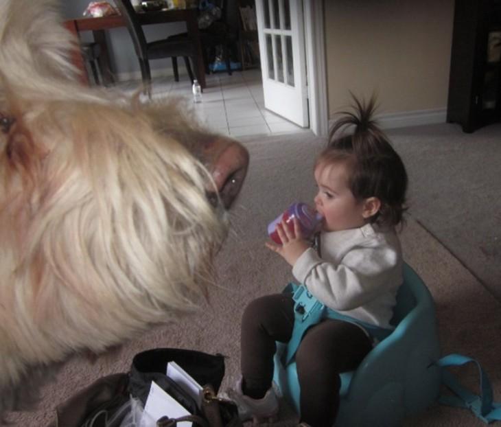 Fotografía del hocico de un perro frente a una niña sentada tomando biberón