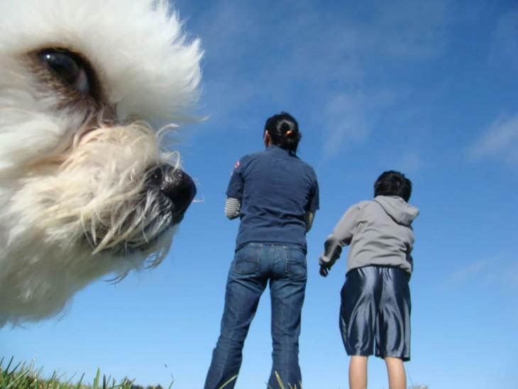 Cara de un pequeño perro con dos personas a un costado