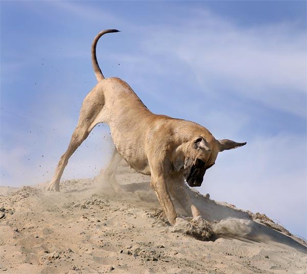 Perro sobre una montaña de tierra