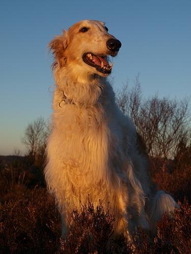Fotografía de un perro sentado en un monte