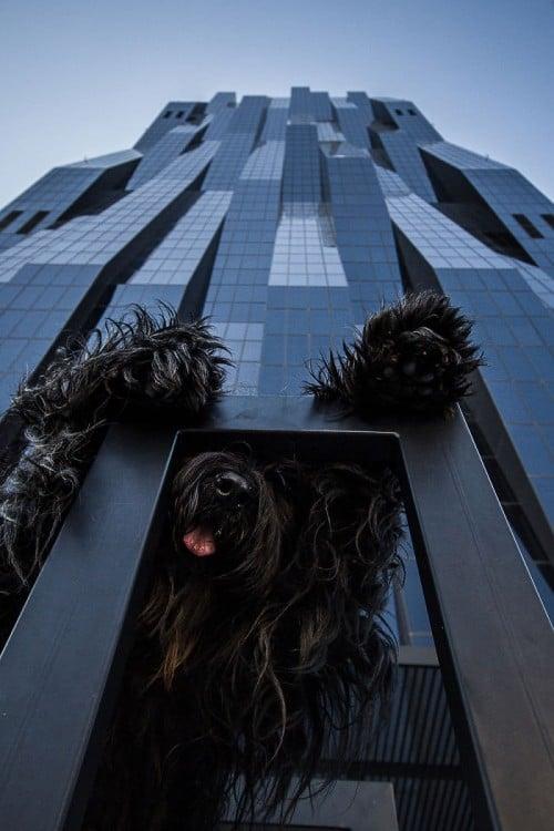 foto de un perro con sus dos patas en un arco que simula estar muy grande