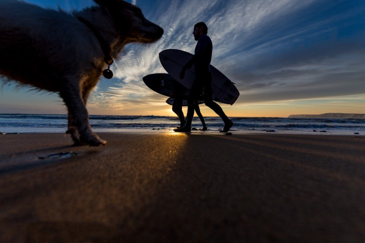 medio cuerpo de un perro caminando en la playa frente a dos personas con tabla de surf