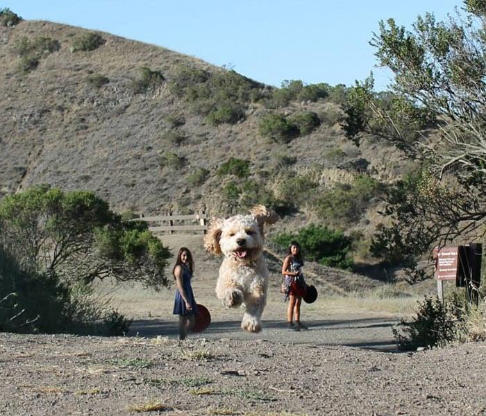 Perro gigante corriendo en medio de dos chicas